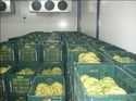 Cold Storage For Food Preservation