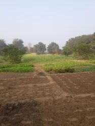 Commercial Tt Agricultural Land, Size/ Area: 1 Acre