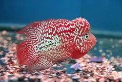 Exotic Fishes, Packaging Type: Thermocol, 5-10 Years