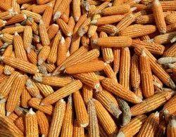 SKILL Foods Yellow Maize, Organic