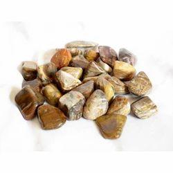 Petrified Stone