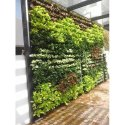 Natural Grass Live Vertical Garden, For Decoration And Gardening
