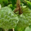 Custard Apple Flavour
