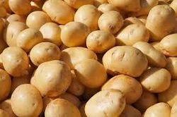 Brown Round Potato, Packaging Type: Jute Bag