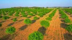 Open Plots And Farm Lands At Shadnagar, Size/ Area: 606 Sq Yards