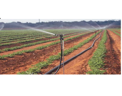 Raindrip Plastic Drip Irrigation System