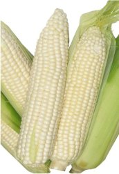 Indian White Corn Seed / Maize, Organic