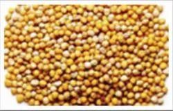 Mustard Refrigeration Services