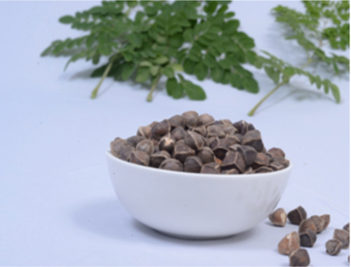 Organic Natural Moringa Seeds, For Oil Extraction, Cultivation, With And Without Wings