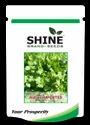 Hybrid Coriander Seed - Ruchi (imported)