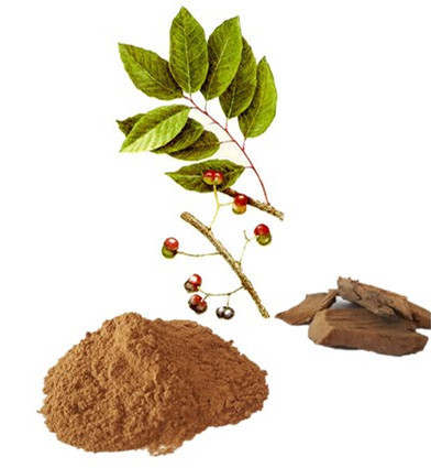 Pygeum Africanum Extract, Packaging Type: Hdpe Drum, Packaging Size: 10 To  25 Kg, Rs 1450 /kg | ID: 16225386430
