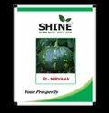 Shine Brand Seeds, Shine Brand Hybrid Pumpkin Seeds - F1 Nirvana, Pack Size: 10gm