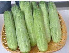 Cucumber Hybrid Ragini