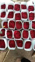 Fresh Red Rose, Shape: Gallica