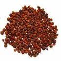Jyotishmati Seeds/Malkangni