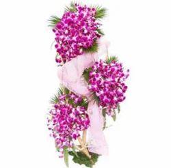 Purple Wish Orchids