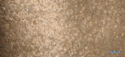 Mica Chip Wallpaper WK A