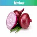 Red Whole Onion