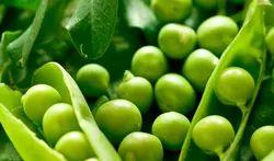 A Grade Global Green Pea, Gunny Bag