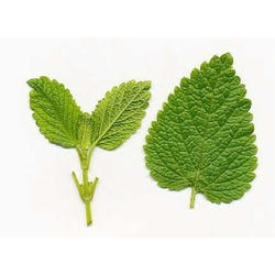 Lemon Balm Extracts Melissa Extract