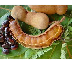 Surendraray & Co Tamarindus Indicus, 10 Kg, Packaging: Packet