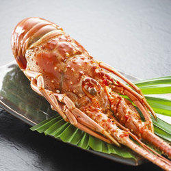 Frozen Lobsters - Wholesale Price for Frozen Lobsters in India