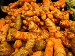 Farm Harvested Raw Turmeric Fingers (non-boiled)