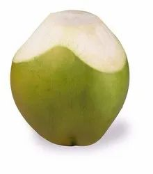 Pollachi Tender Coconut, Packaging Size: 13