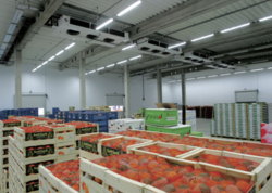 Cold Storage Room For Fruits