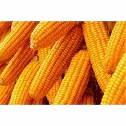 Yellow Maize, Packaging Type: Pp Bag, High in Protein