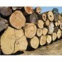 Timber Wood Log