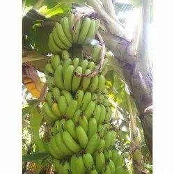 G9 A Grade Green Cavendish Banana, Crate, 20 Kg