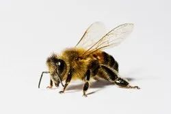 Commercial Fume-based Treatment Bee Control Services