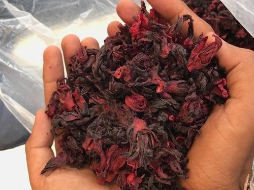 Herbs Dried Hibiscus Flower Manufacturer From Bhavnagar
