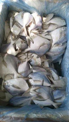 Seafood   Pamfert   Krishna Seafood Suppliers, Visakhapatnam