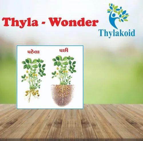 Thyla-Wonder