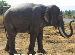 FRP Statue Of Elephant