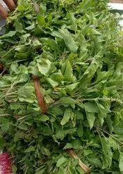 Green Dried Tulsi Leaves, Packaging Type: Bag