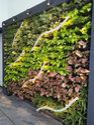 Greenwall Biowall Panels