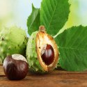 Ambe Natural Horsechestnut 20% Hplc, Packaging Type: Drum