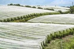 Agricultural Crop Cover With UV Treated Non Woven Fabric