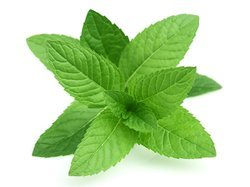 Mint - Pudhina Leaves