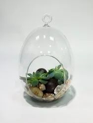 Hanging Oval Glass Terrarium