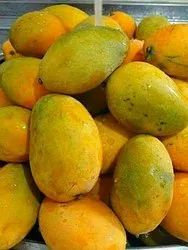 Yellow Common Mangos, Crate, Packaging Size: 20 Kg