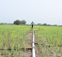 Rain Pipe Irrigation