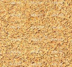 Adilaid Premium Bhaat (Paddy Rice), Packaging Type: Pp Bag