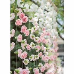Loose Carnations