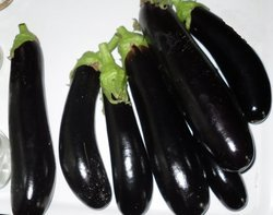 Fresh Brinjal, Pesticide Free  (for Raw Products)