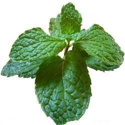 Spray Dried Mint Powder