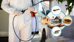 AMC For Pest Control Services